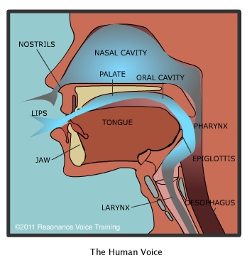 how the voice works – resonance voice training nasal airflow diagram